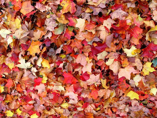 Time For Fall Cleanups and Curbside Leaf Removal! Schedule Now!