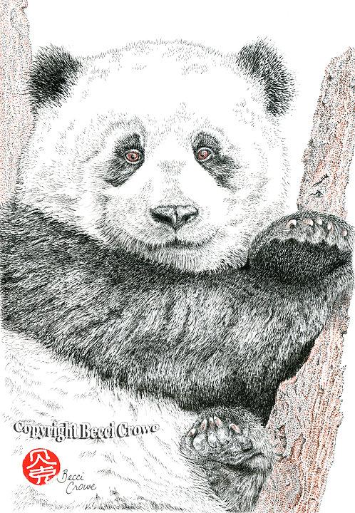 """""""Panda Cub"""""""