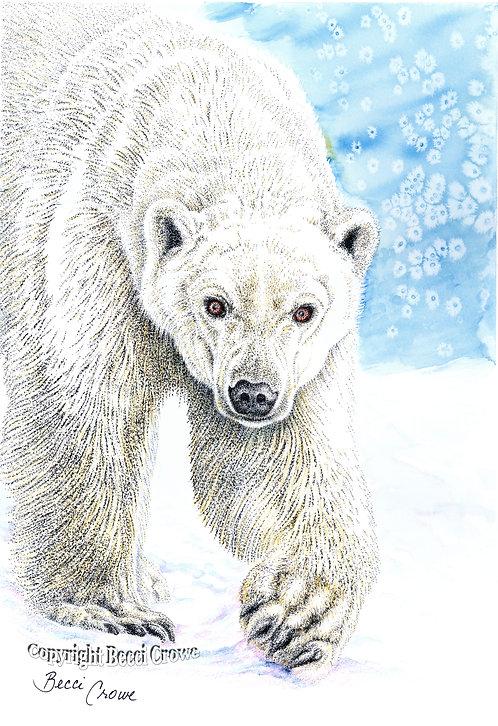 """Ice Bear"""