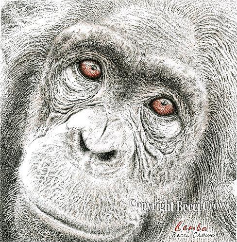 """Chimpanzee """"Lemba"""""""