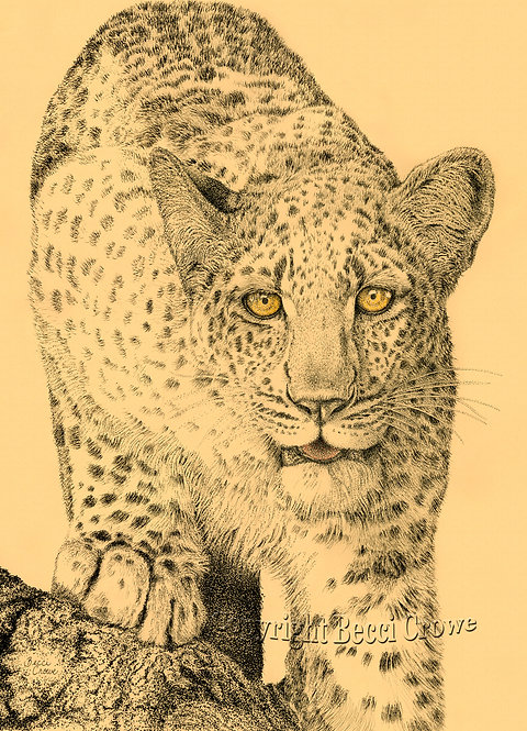 "Leopard ""Golden Eye"""