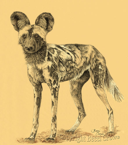 """""""African Painted Dog"""""""
