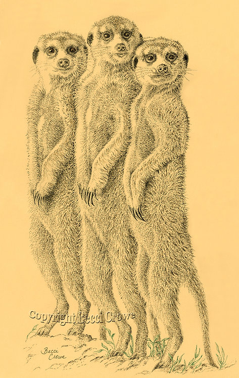 """Meerkat Sentinels"""