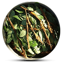 The Ayahuasca Vine.png