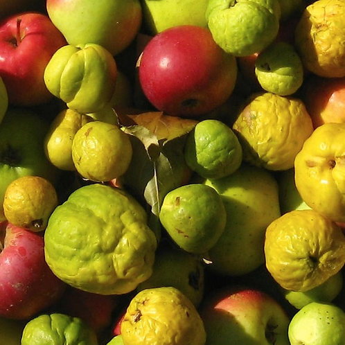 Apple and Quince Blend
