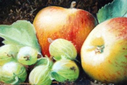 Apple & Gooseberry Blend