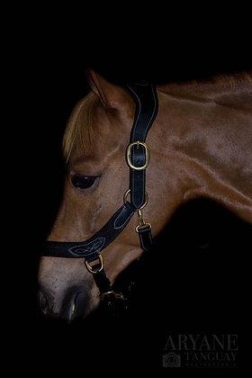 Ergonomic Nylon Leather Halter - PONY Black/Black