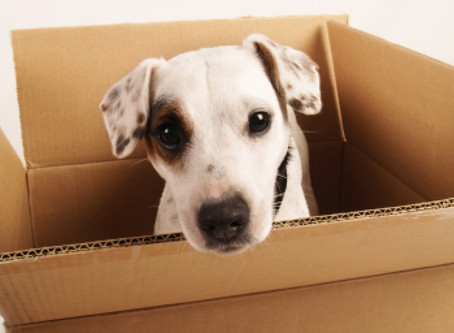 Moving and your Pets