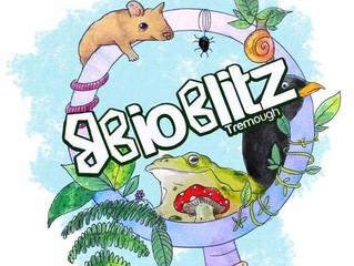 BioBlitz Tremough