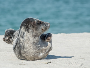 Seal Sanctuary Local Conservation Event