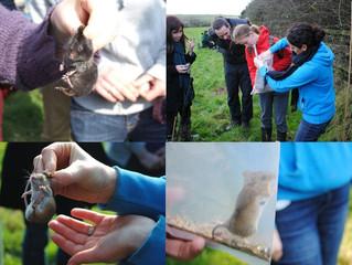 Small Mammal Monitoring Scheme