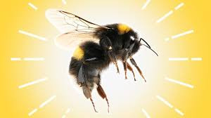 10 Fact about bee stings