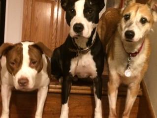 Coco, Bandit & Penny
