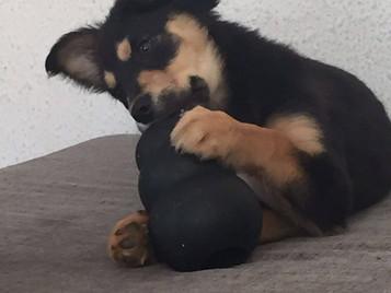 Sophie adoptada!