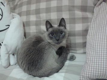 ¡Luna ha sido adoptada!