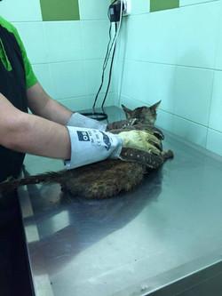 Cuidado veterinario de Pepito