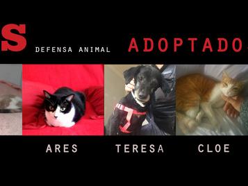 MUCHAS adopciones con final feliz