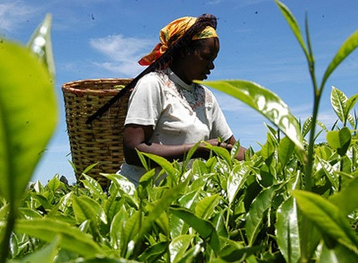 Are African Farmers really Employed?Here are some interesting findings