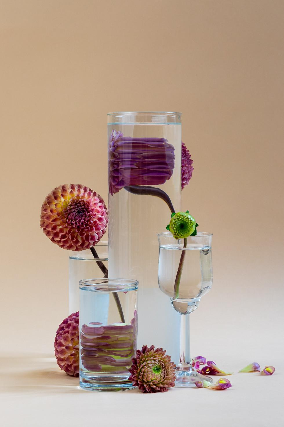 Bloemen achter het glas