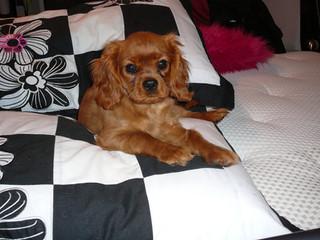 Gidget+pup1.JPG