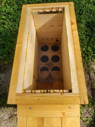 Le corps de ruche