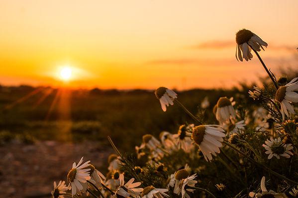 Garryvoe with Flowers 3.jpg