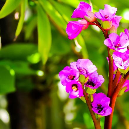 Backyard Flowers.jpg
