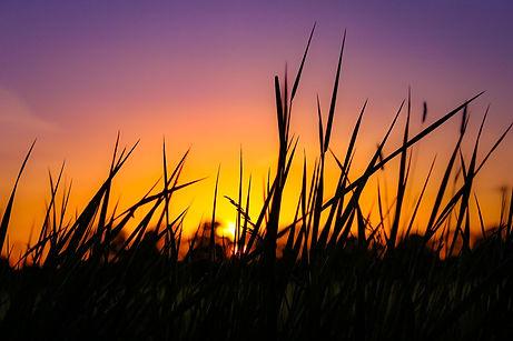 Sunset.5.jpg