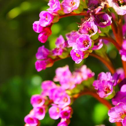 Summertime Flowers.jpg