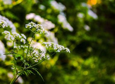 Riverwalk Flowers.jpg