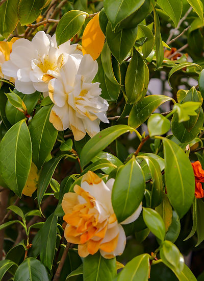 Flowers Portrait.jpg
