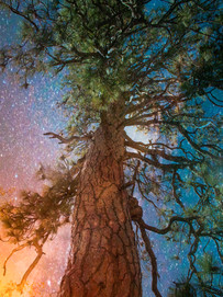 Nature's Aura