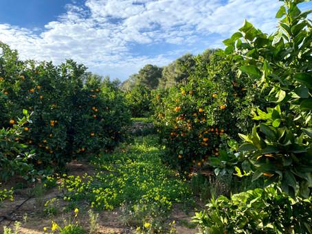 INICIO TEMPORADA: Naranjas Peña 2020/21