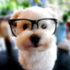 DogWithGlasses.jpg
