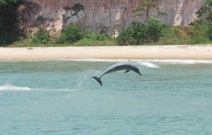 Baía dos Golfinhos Praia de Pipa 3ª melhor praia do mundo 2021 tripadvisor