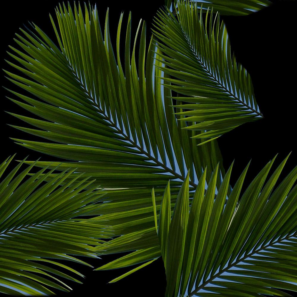 Estampa Salgar Palms