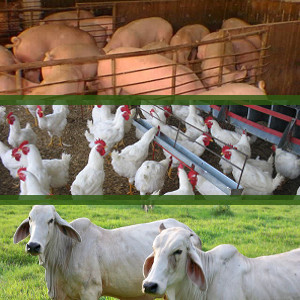 ERP SAP S/4HANA Agroindustrias