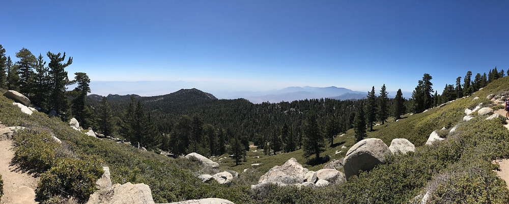 Panoramic view above the tree line