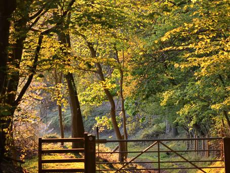 Teme Valley Walking