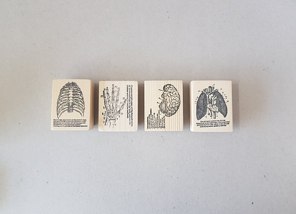 Anatomy Series Rubber Stamps by MyPaperProjects