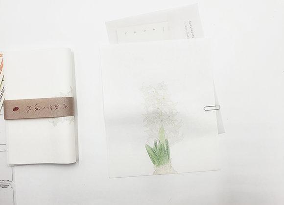 Classiky:  Washi Paper White Hyacinth