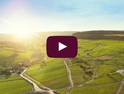 A origem dos terroirs de Bourgogne