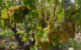 chateau-avrille-biotteau-02.jpg