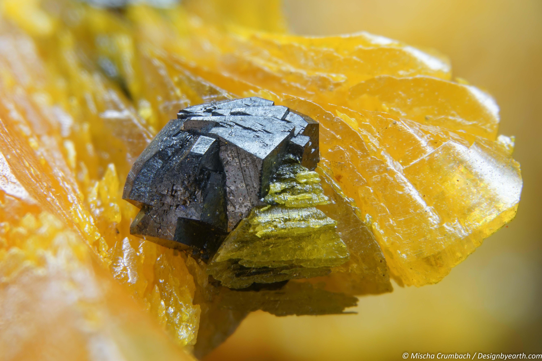 Beetle on a Petal