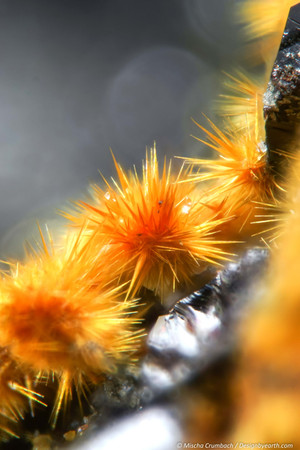 Spores