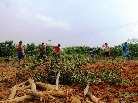 שריפת פחם ותמיכה ביערות בני-קיימא של עצים קשים (הארד ווד)