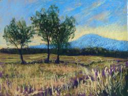 Wheat Field at Six Mile Farm