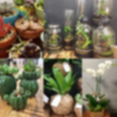 Brisbane Succulents and Potted Plants