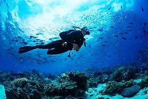 Marine research in Fiji's Yasawa Islands