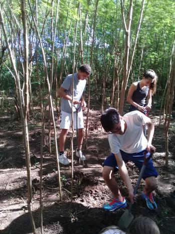 Mangrove replanding with Vinaka Fiji